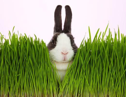 /nick-assets/blogs/images/kids-choice-awards/alice-bunnies.jpg