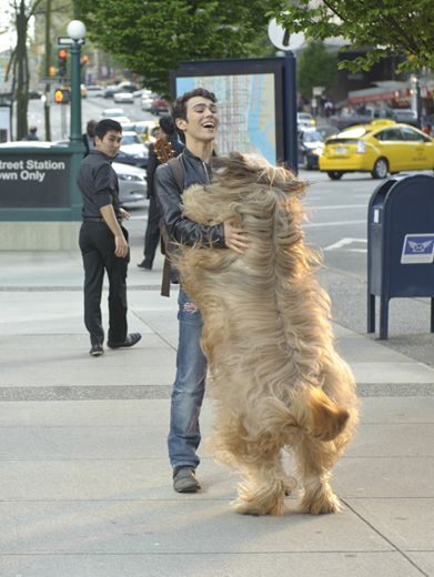 Bear Hug!|Is that the hugest dog you've ever seen or what?! Cuddliest hug ever!